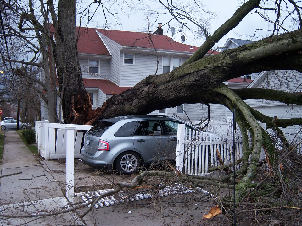 Tree Falls on the House